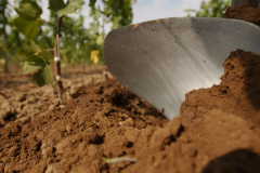Seit Generationen ist unser Boden die wichtigste Grundlage - wir gehen sorgsam mit diesem Gut um!
